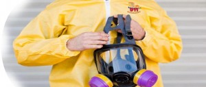 Mold Remediation Chicago